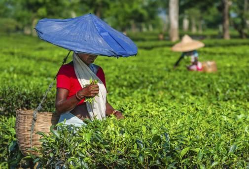 Hur rent och fint är ditt te egentligen?