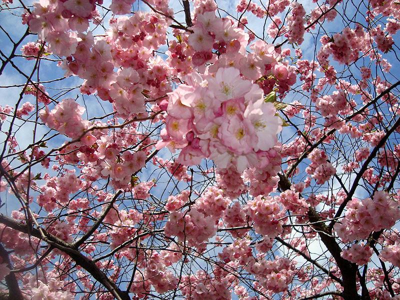 Cherrytreeedited