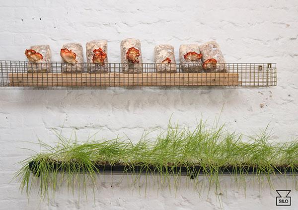 silo-mushrooms-wheatgrass