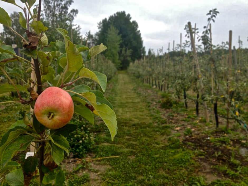 Äppeldagar 23-24 september