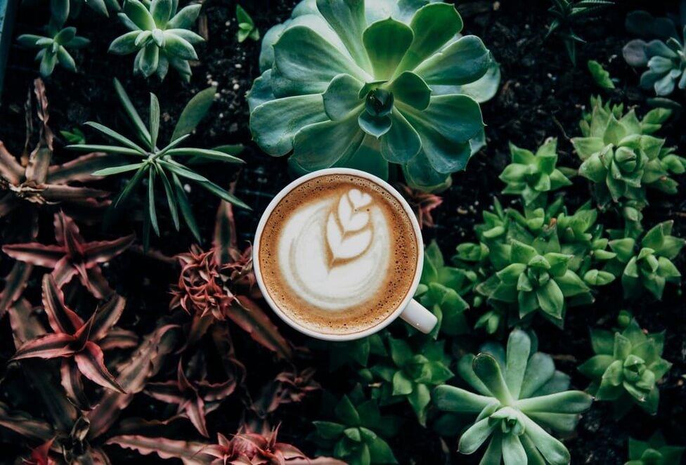 Landets vassaste baristor och bästa kaffeupplevelser – här är samtliga nominerade