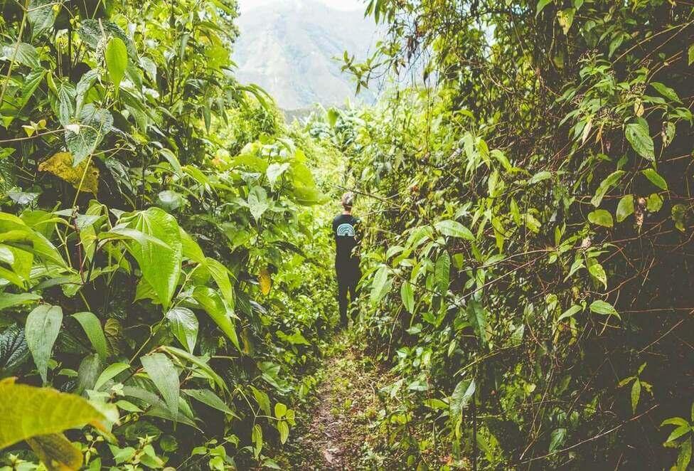 Buda hem en resa till en av Lykkes kaffegårdar